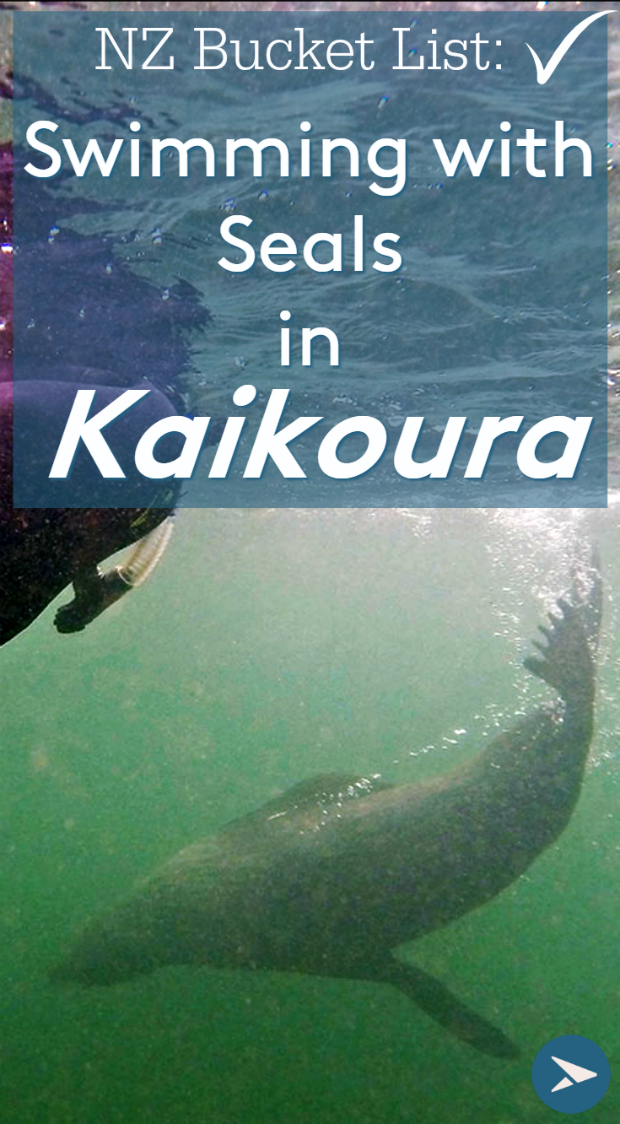 Pin it - Swimming with seals in Kaikoura